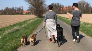 individuelles hundetraining bei hunderbar